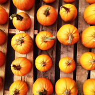 rows_of_pumpkins